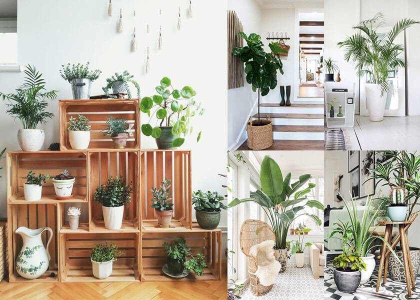 9 Houseplants for Improving Interior Air Quality level studio